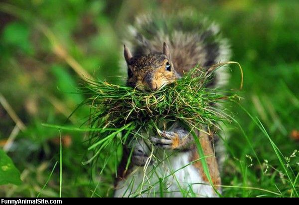 Funny Animals Eating 24 Background Wallpaper
