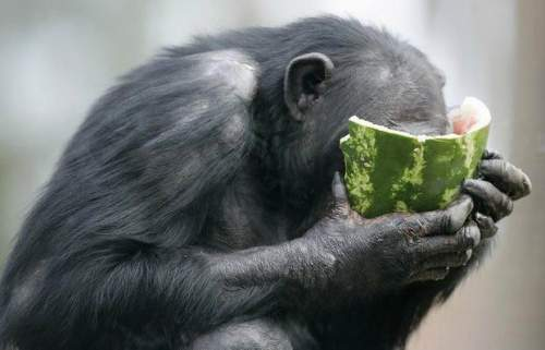 Funny Animals Eating 9 Cool Wallpaper