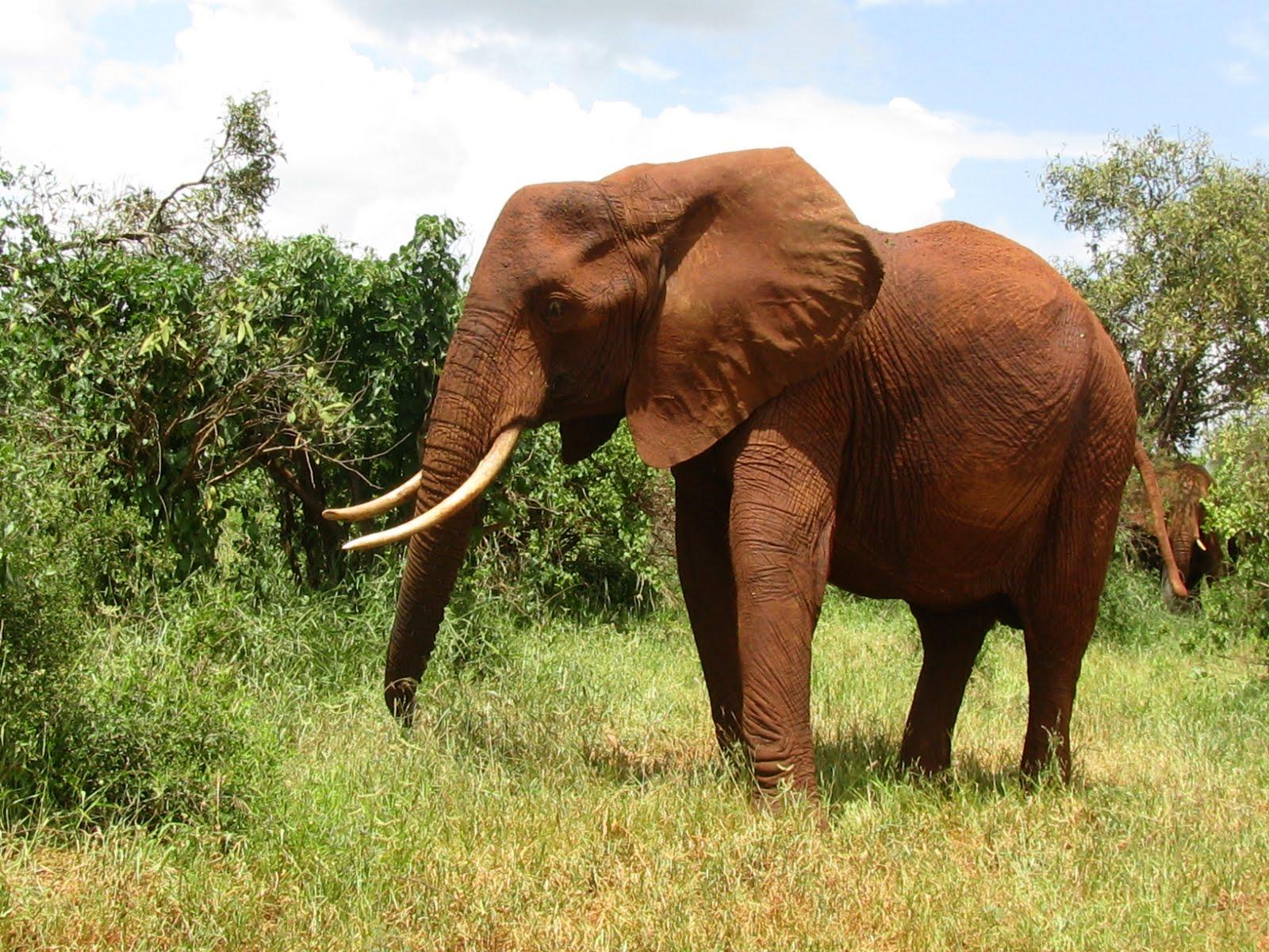 Funny Animals In Africa 14 Desktop Background