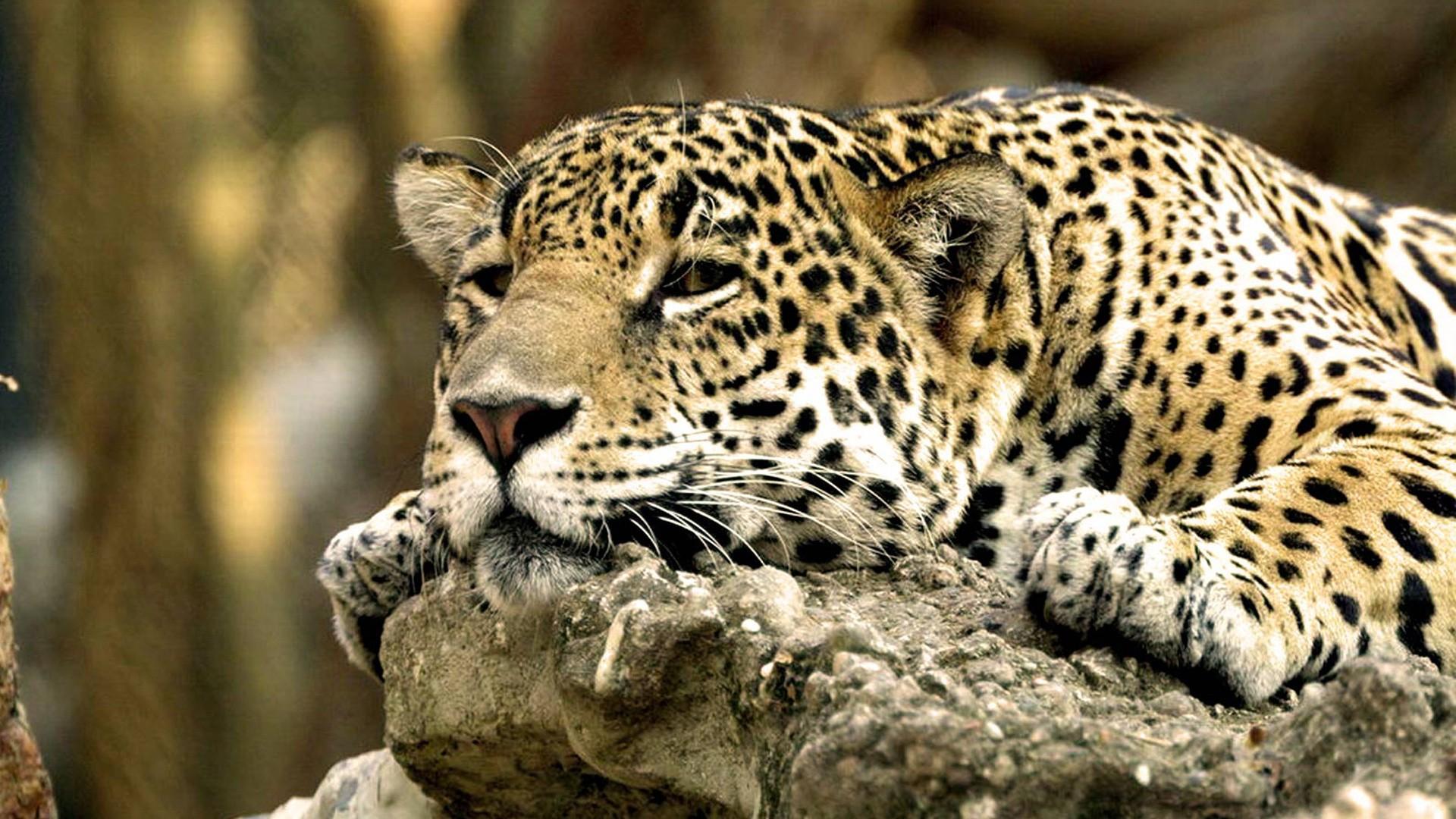 African animals wallpaper hd - photo#28