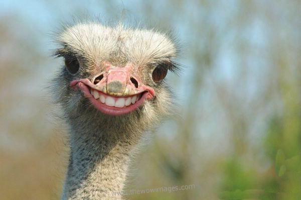 Kết quả hình ảnh cho funny animal pictures