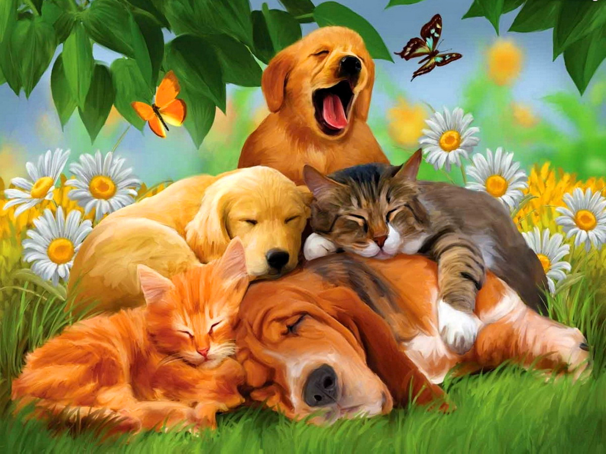 Funny Animals Wallpapers 30 Hd Wallpaper