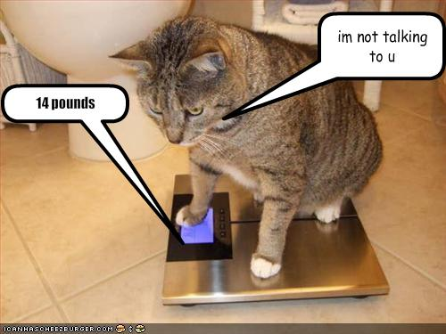 Funny Animals With Captions 16 Hd Wallpaper