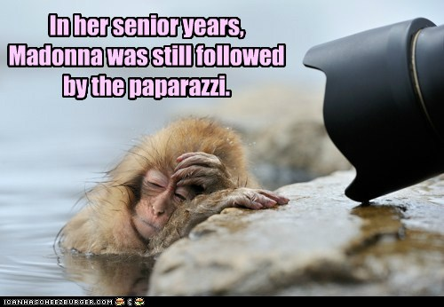 Funny Animals With Captions 20 Hd Wallpaper