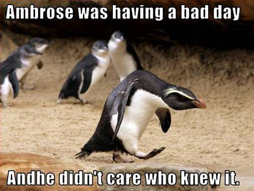 Funny Animals With Captions 29 Cool Wallpaper