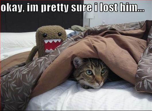 Funny Animals With Captions 6 Desktop Wallpaper
