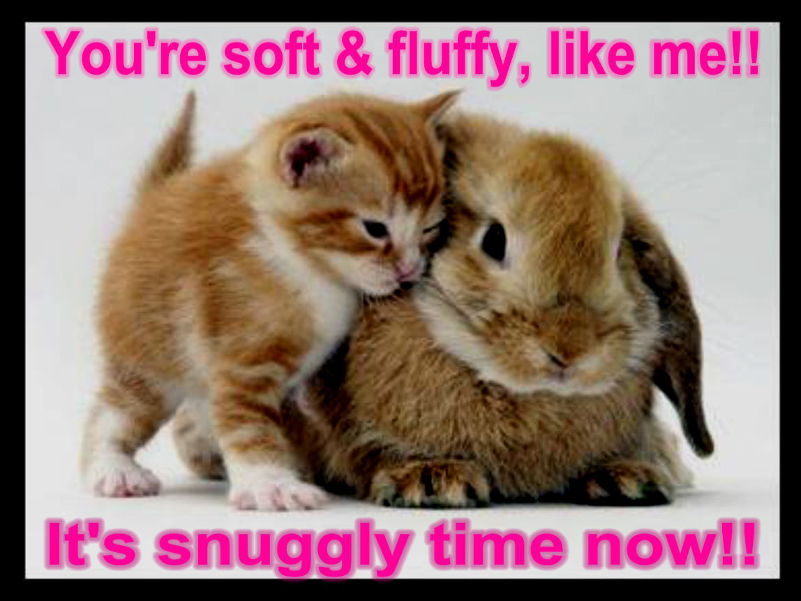 Animals Quotes Funny Animals With Quotes 1 Desktop Background  Funnypicture