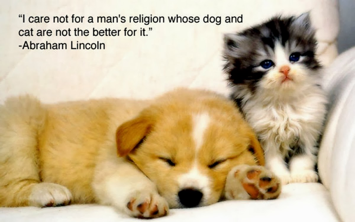Funny Animals With Sayings 1 Free Wallpaper - Funnypicture.org