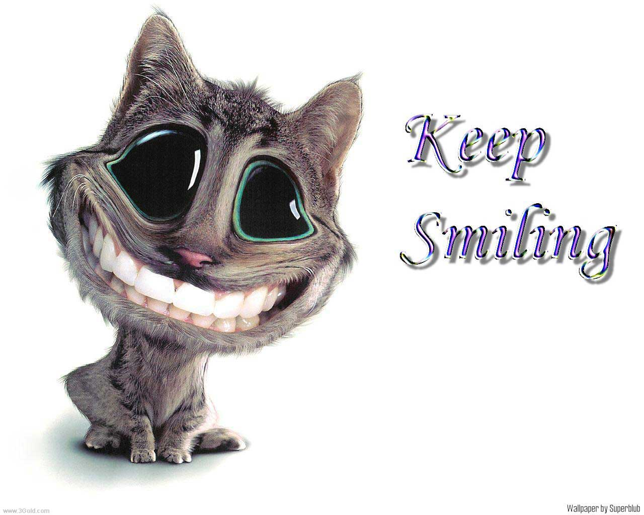 funny animated animals 8 hd wallpaper funnypicture org