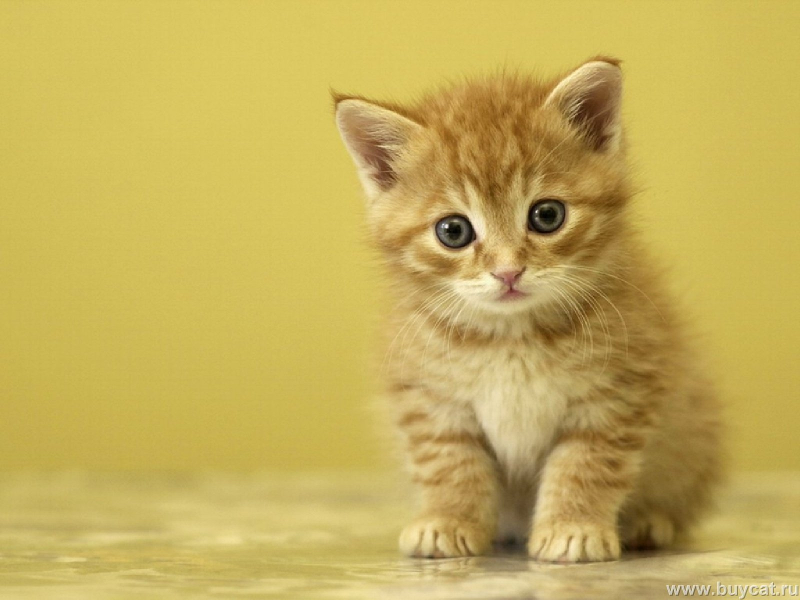 Funny Animated Cats 19 Widescreen Wallpaper