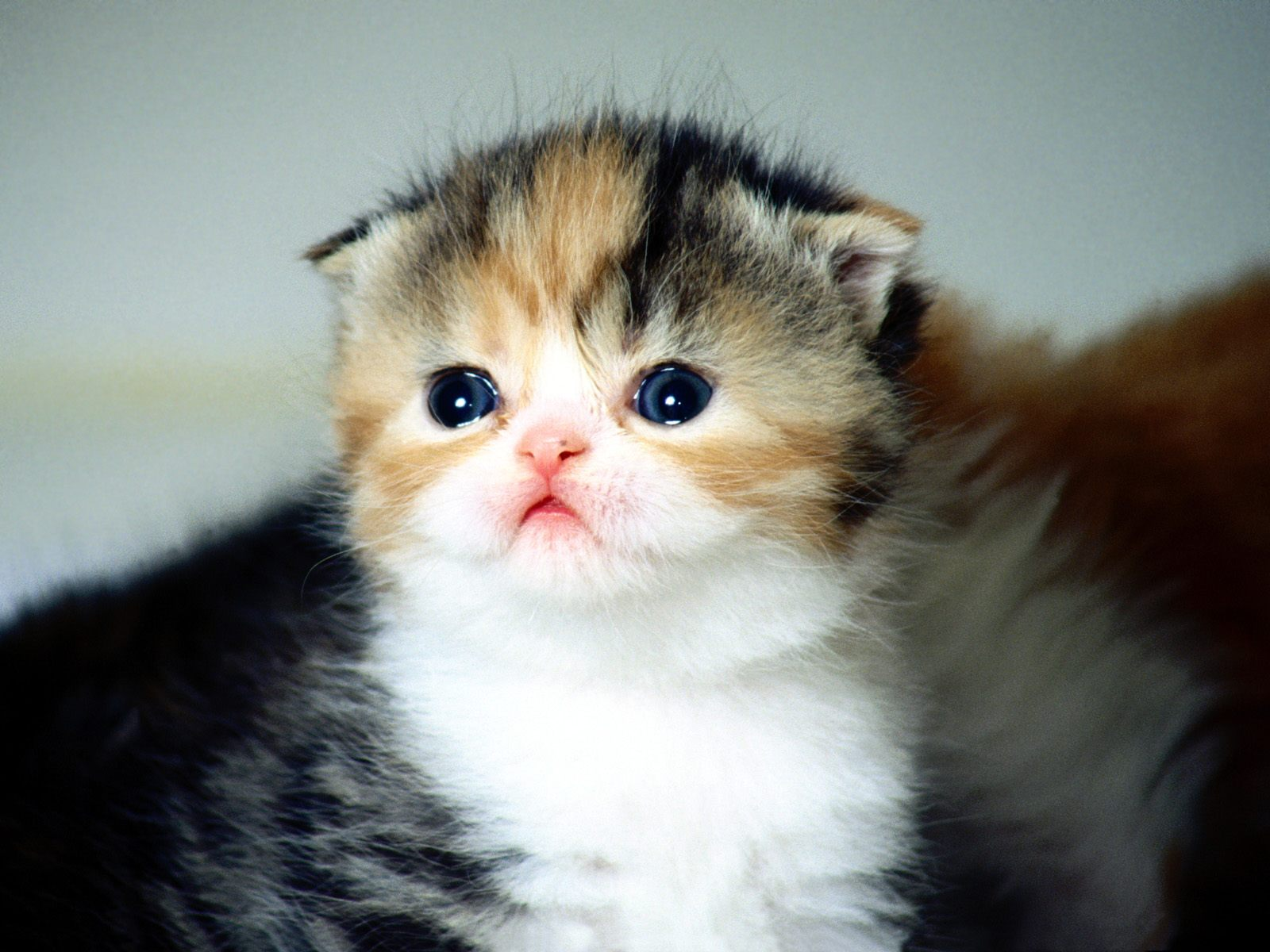 Funny Baby Cats 20 Free Hd Wallpaper