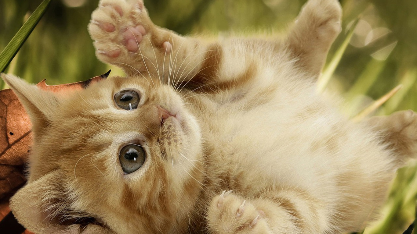 Funny Baby Cats 4 Free Wallpaper