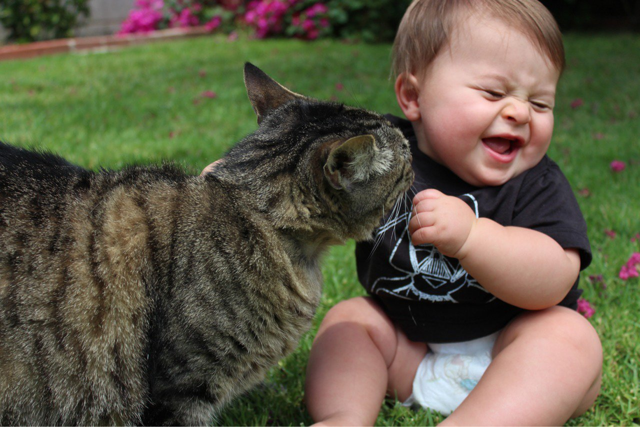 Funny Baby Cats 6 Free Wallpaper  Funnypictureorg