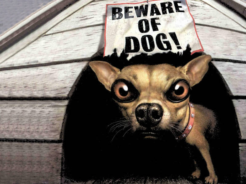 Funny Beware Of Dog Signs 15 Wide Wallpaper