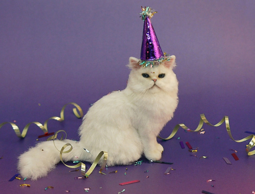 Funny Birthday Cat 20 Background
