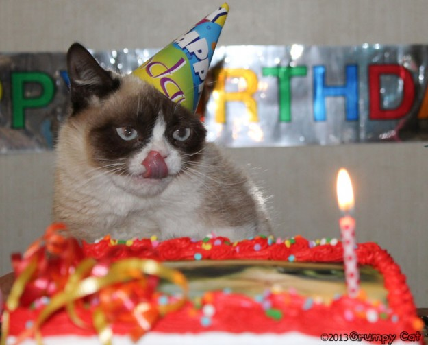 Funny Birthday Cat 27 Desktop Wallpaper
