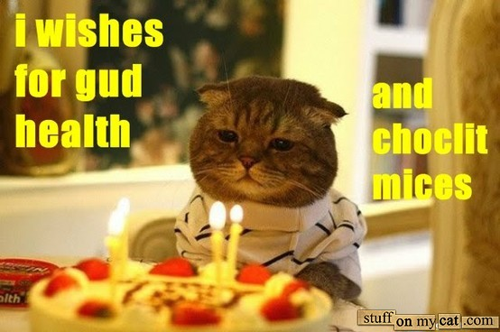 Funny Birthday Cat 30 Background Wallpaper