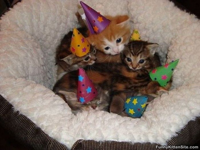 Funny Birthday Cat 31 Free Hd Wallpaper