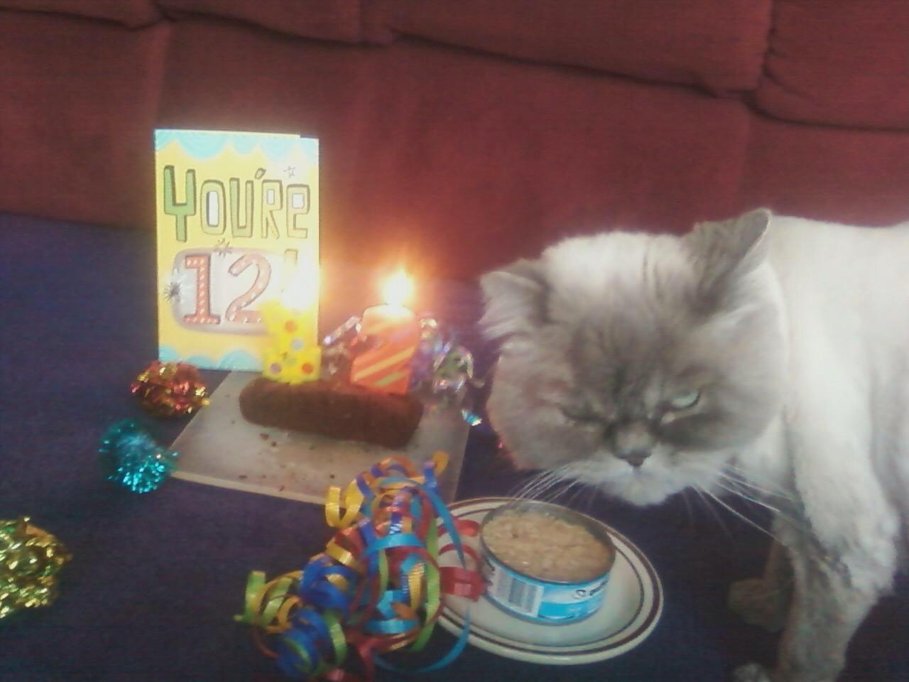 Funny Birthday Cat 4 Widescreen Wallpaper