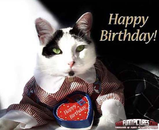 Funny Birthday Cat 5 High Resolution Wallpaper