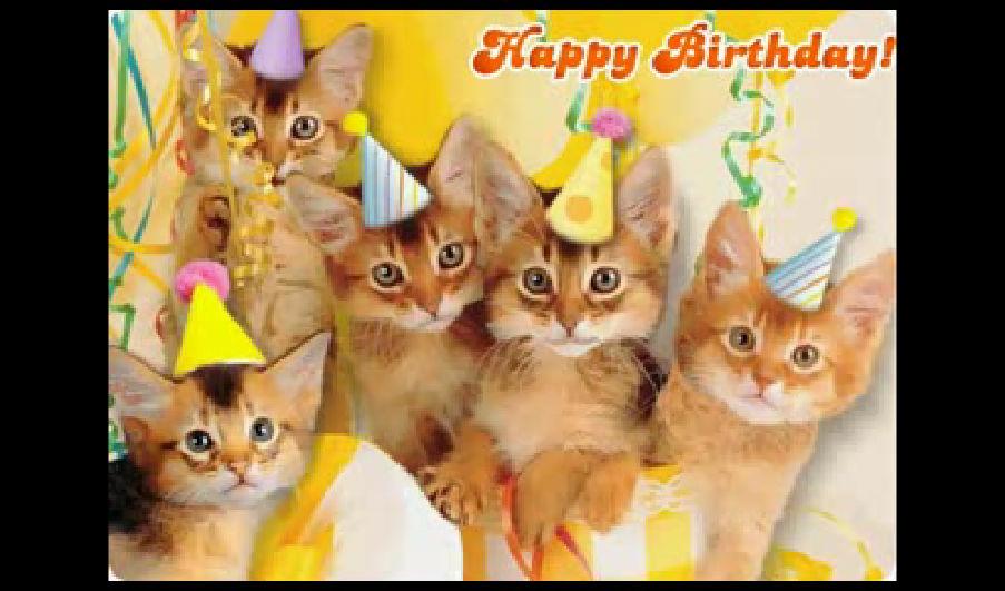 Funny Birthday Cat 7 Desktop Wallpaper