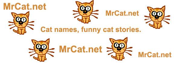 Funny Boy Cat Names 13 Cool Hd Wallpaper