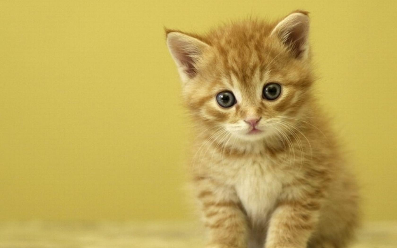 Funny Boy Cat Names 16 Cool Wallpaper
