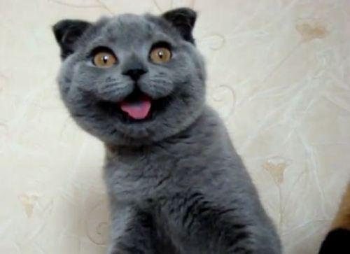 Funny Boy Cat Names 8 Cool Wallpaper