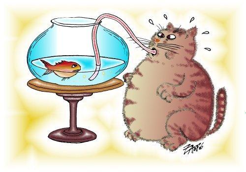 Funny Cartoon Cat 23 Hd Wallpaper