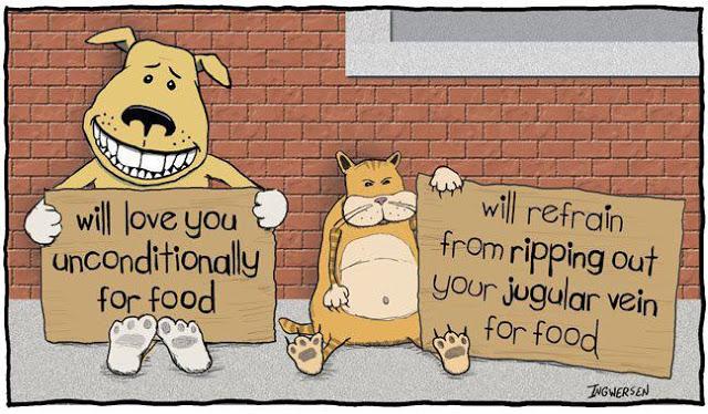 Funny Cartoon Cat 5 Cool Hd Wallpaper