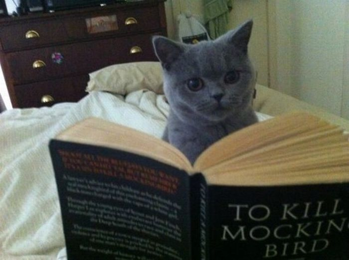 Funny Cat Books 2 High Resolution Wallpaper