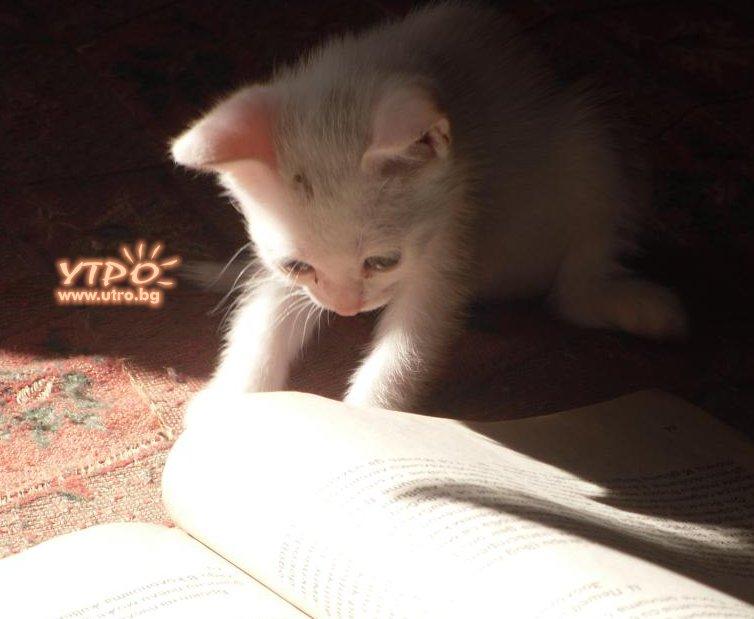Funny Cat Books 26 High Resolution Wallpaper