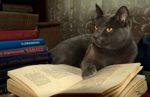 Funny Cat Books 31 Widescreen Wallpaper