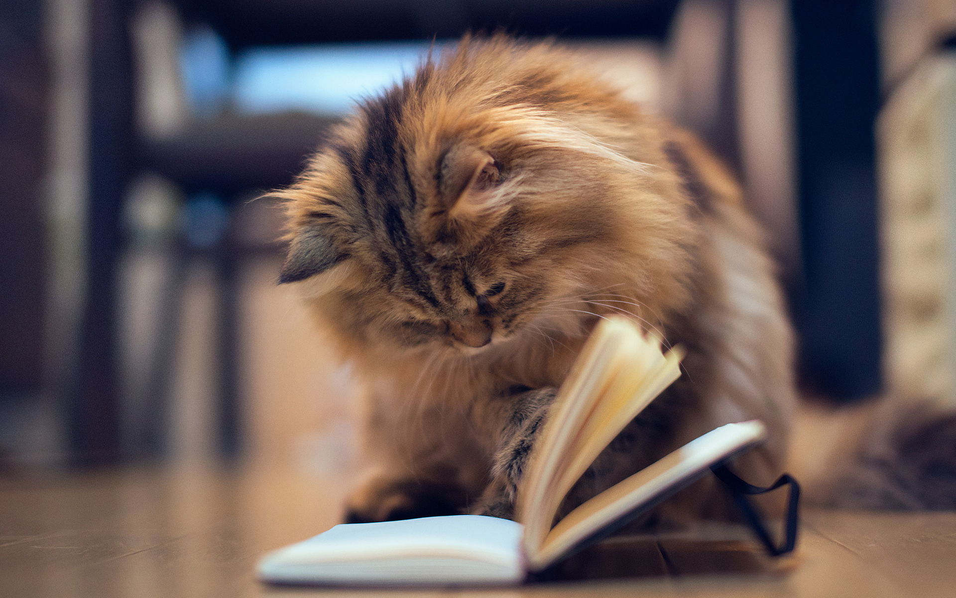 Funny Cat Books 7 High Resolution Wallpaper