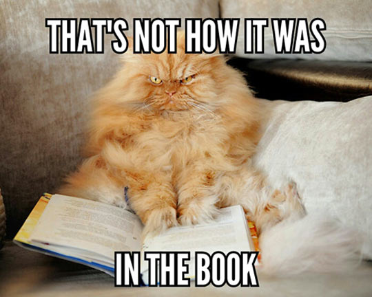 Funny Cat Books 9 Cool Wallpaper