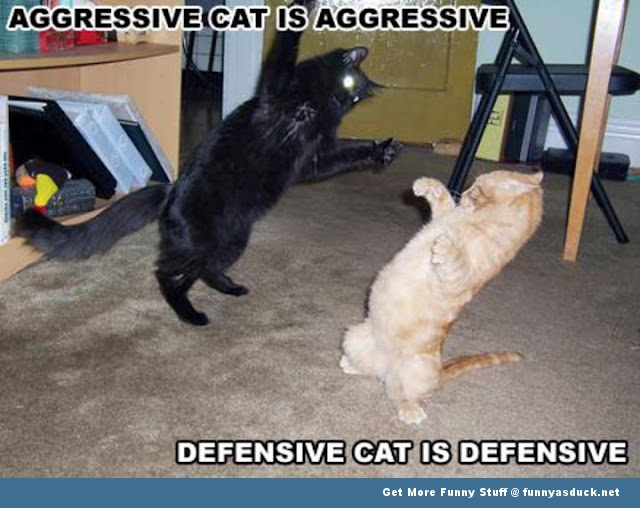 Funny Cat Fight 5 Free Hd Wallpaper