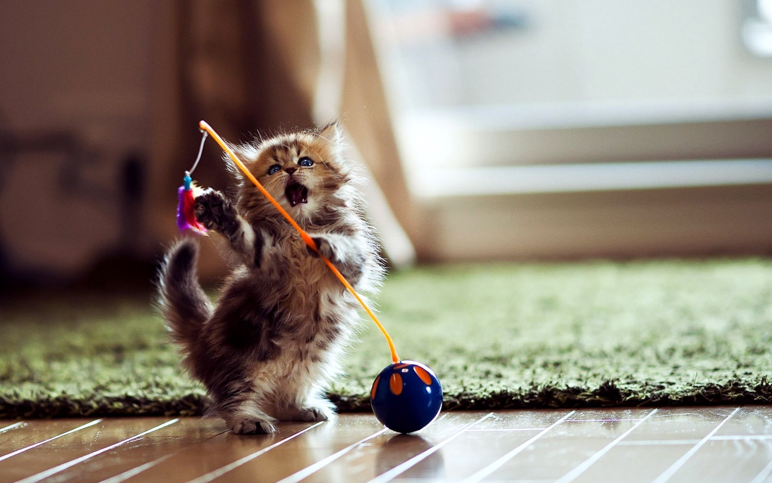 Funny Cat Games 14 High Resolution Wallpaper