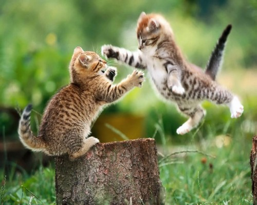 Funny Cat Jumping  19 Hd Wallpaper