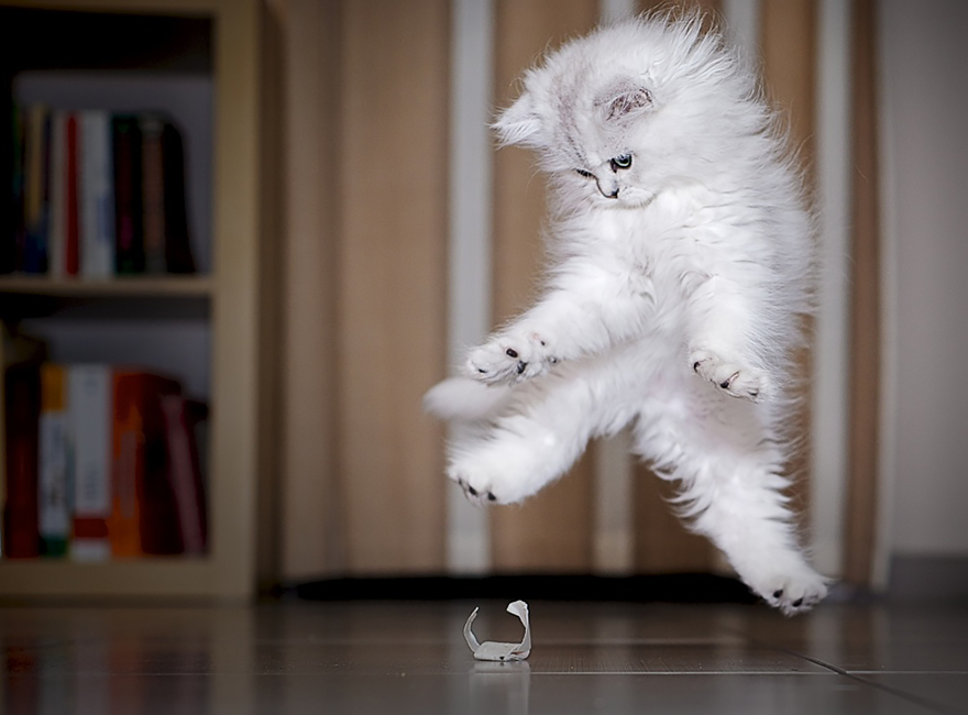 Funny Cat Jumping 26 Free Wallpaper