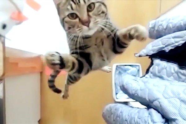 Funny Cat Jumping  33 Desktop Wallpaper