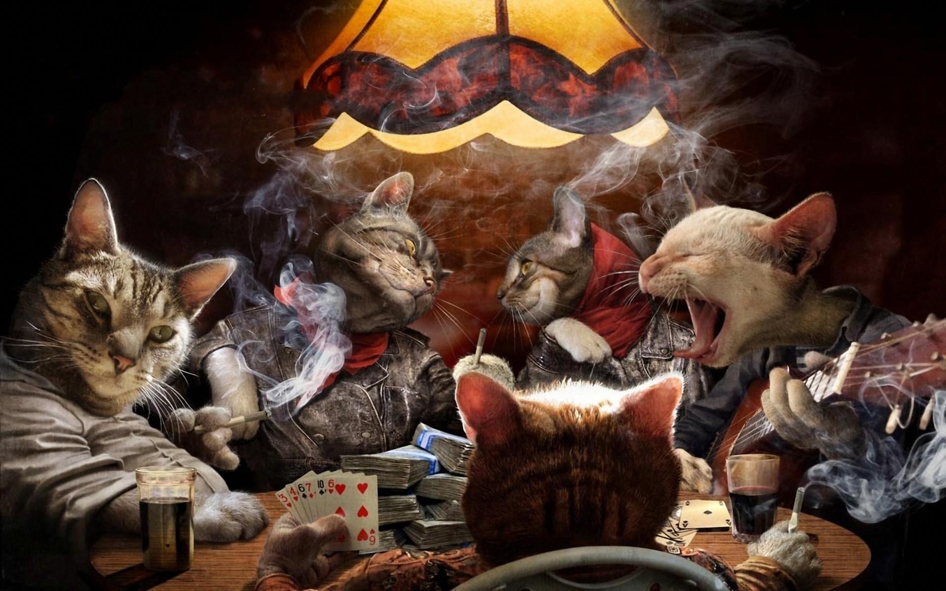 Funny Cat Playing 12 Desktop Wallpaper