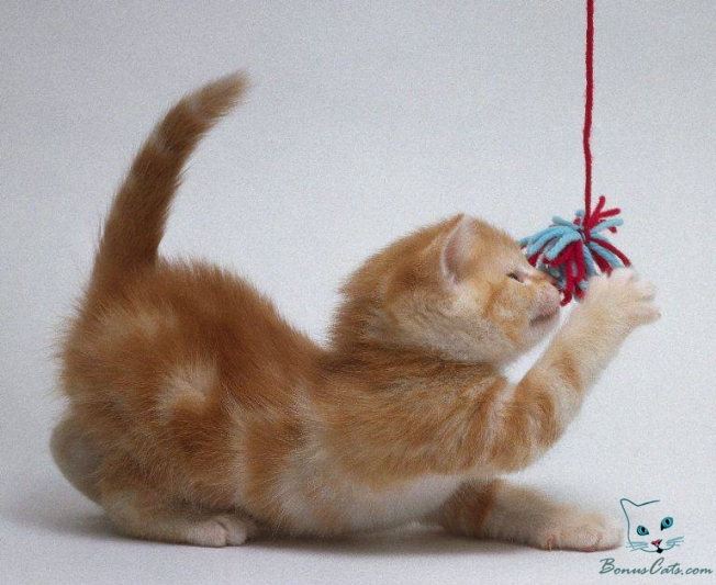 Funny Cat Playing 15 Free Hd Wallpaper