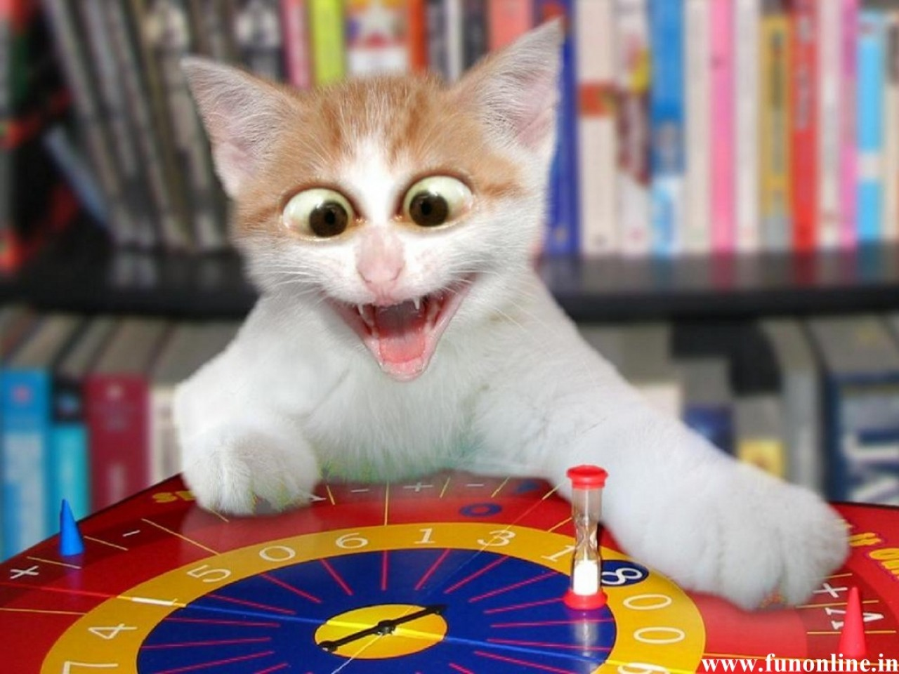 Funny Cat Playing 23 Background Wallpaper