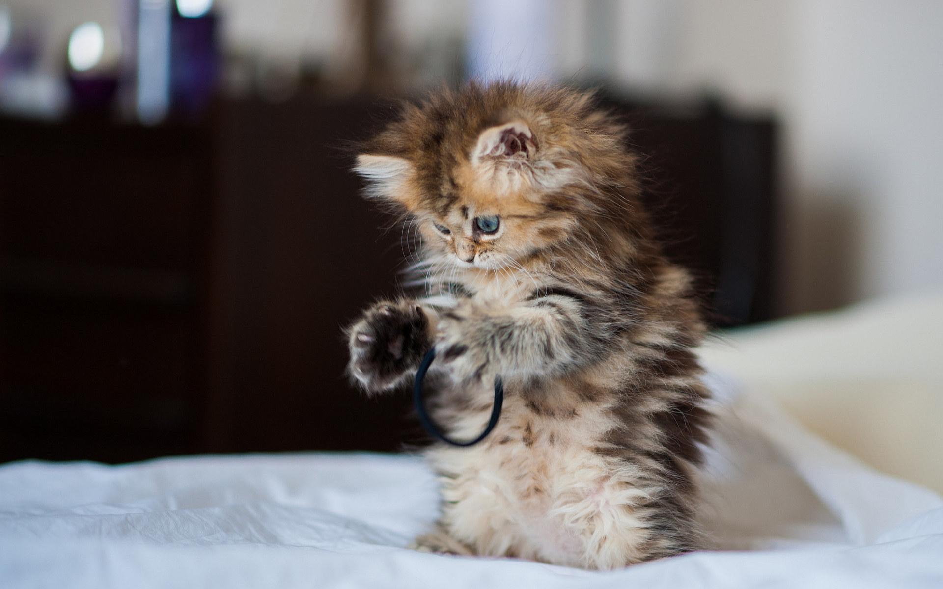 Funny Cat Playing 50 Desktop Wallpaper