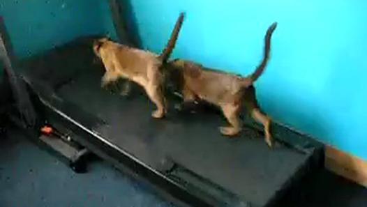 Funny Cat Running 10 Cool Wallpaper