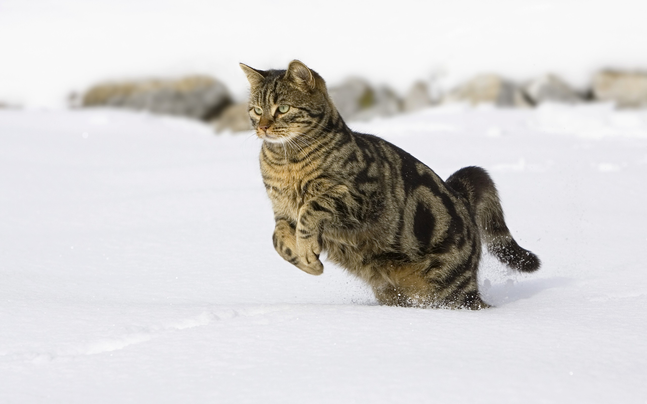 Funny Cat Running 20 Cool Wallpaper