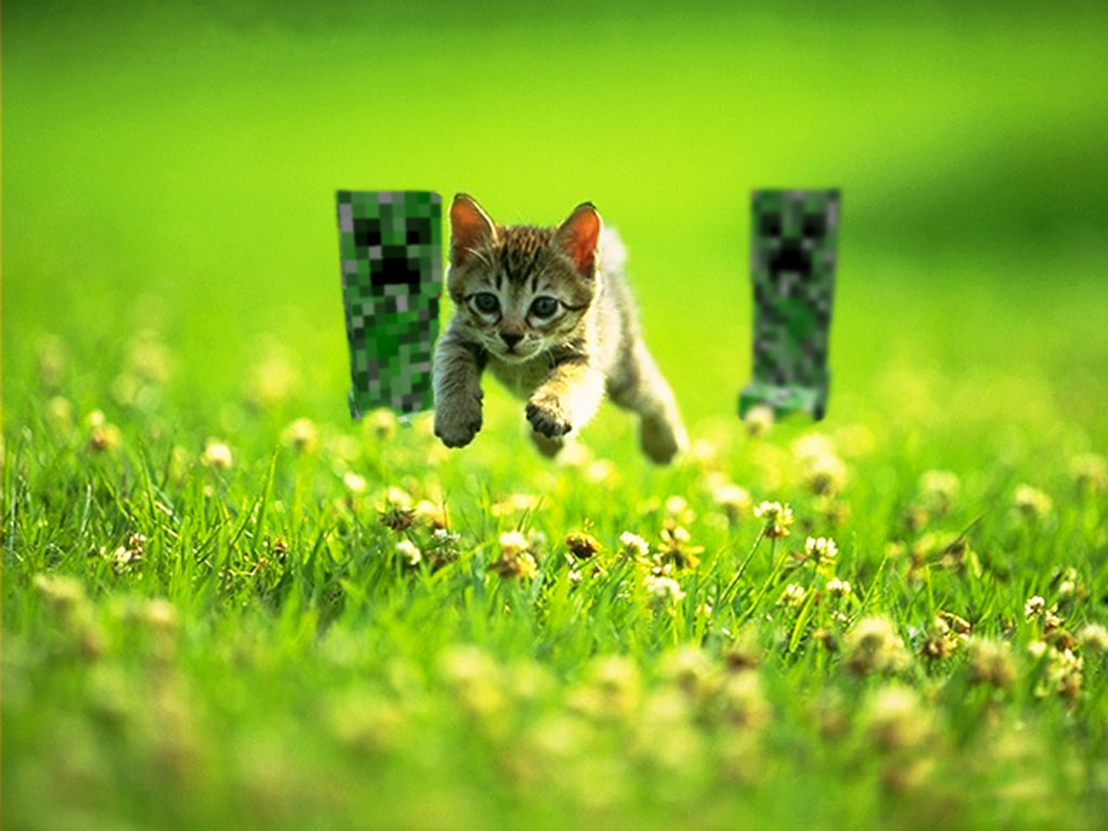 Funny Cat Running 8 High Resolution Wallpaper