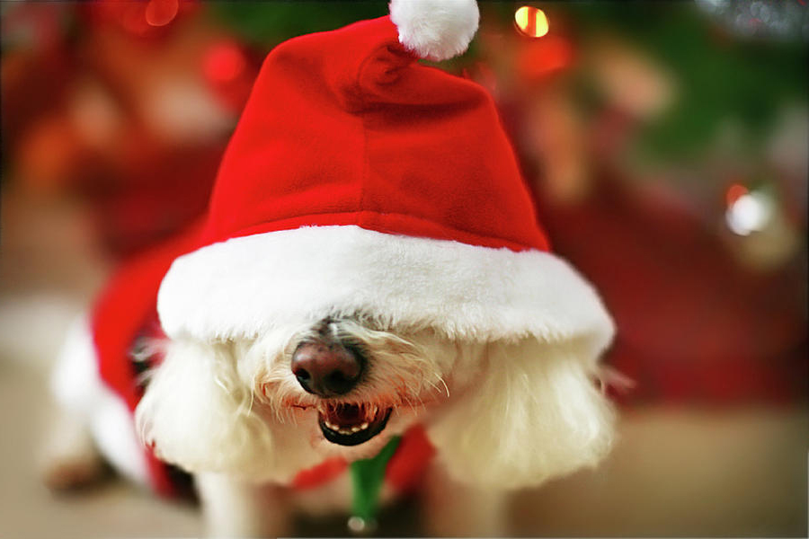 funny christmas dogs 13 wide wallpaper - Funny Christmas Wallpaper
