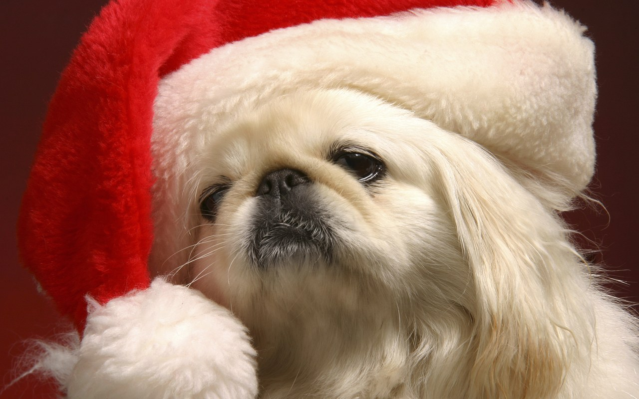 Funny Christmas Dogs 36 Desktop Background