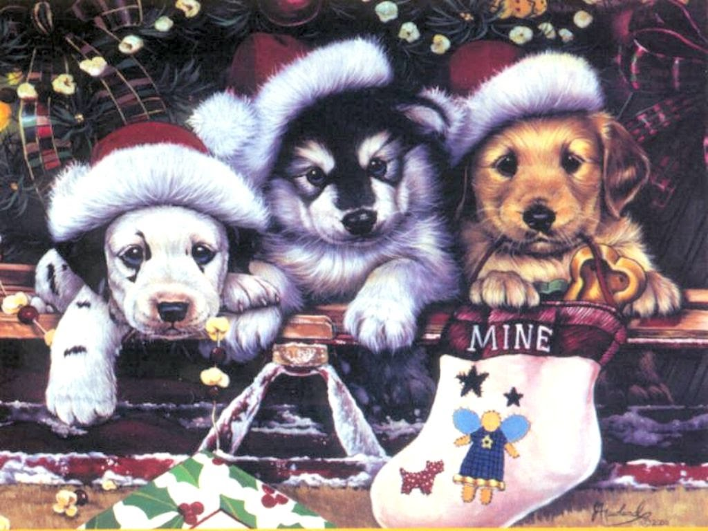 Funny Christmas Dogs 4 Desktop Background - Funnypicture.org